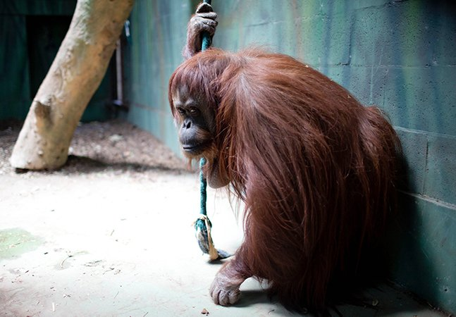 Depois de 140 anos de funcionamento e muito polêmica, zoológico de Buenos Aires fecha as portas