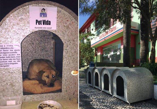 Nesta cidade em SC, os cães de rua ganharão 500 casinhas para abrigá-los