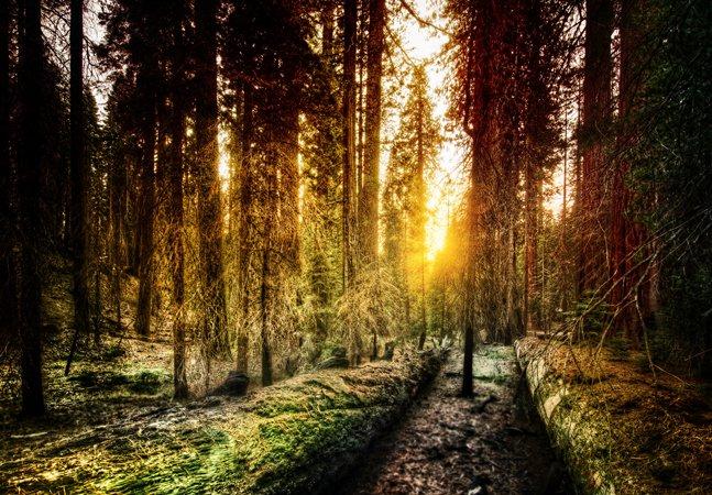 Cemitérios-floresta trocam lápides por árvores em áreas protegidas