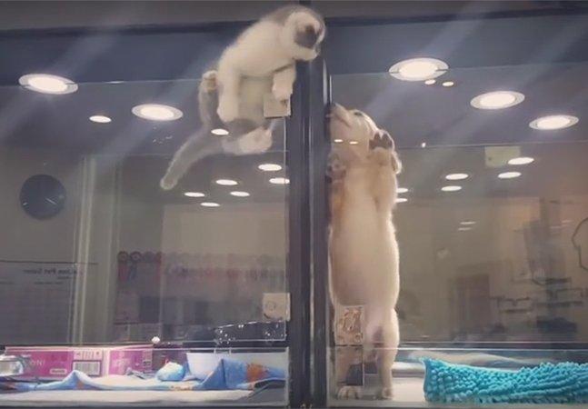 Gatinho pula vitrine de pet shop para brincar com filhote de cachorro que estava sozinho