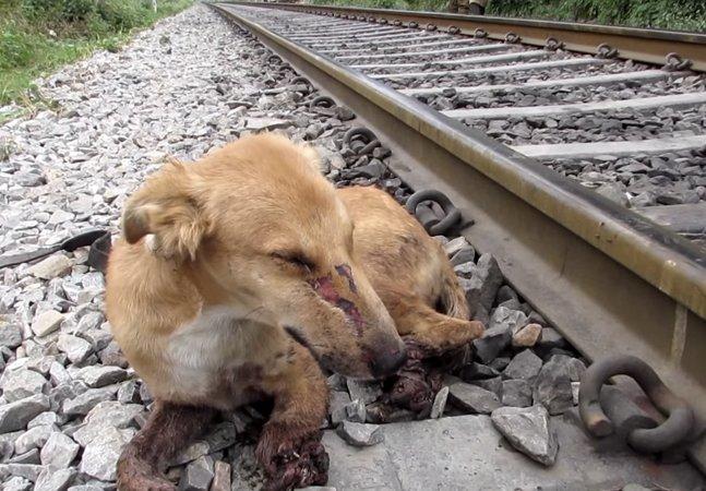 [VÍDEO] O destino desse  cãozinho atropelado vai recuperar  sua fé na humanidade