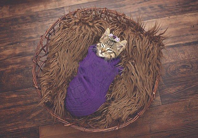 Família adota gatinha e cria álbum fotográfico encantador para celebrar sua chegada