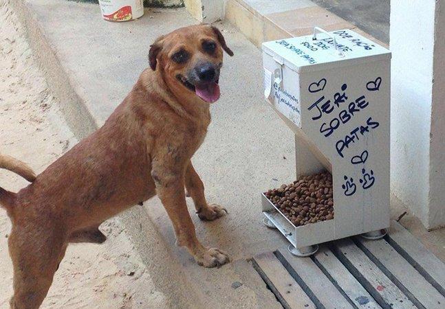 Comedouros comunitários  para animais são distribuídos  nas ruas de Jericoacoara