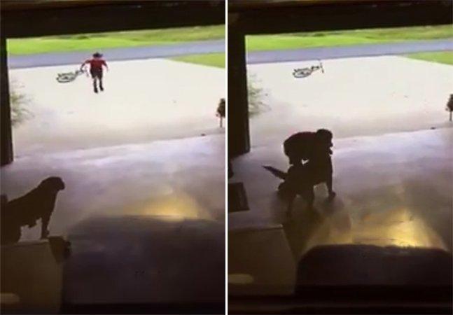 Vídeo apaixonante flagra garoto que invadia garagem 'só' pra roubar um abraço de uma cachorrinha