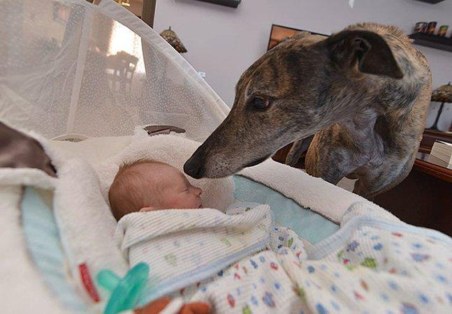Cachorro resgatado que tinha medo de pessoas acompanha gravidez da dona e se apaixona por seu irmãozinho