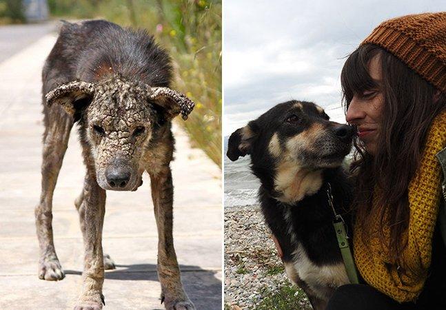 A maravilhosa transformação dessa cadelinha mostra o poder do amor entre humanos e animais