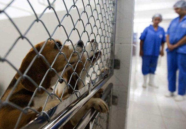 Austrália proíbe a venda de produtos testados em animais