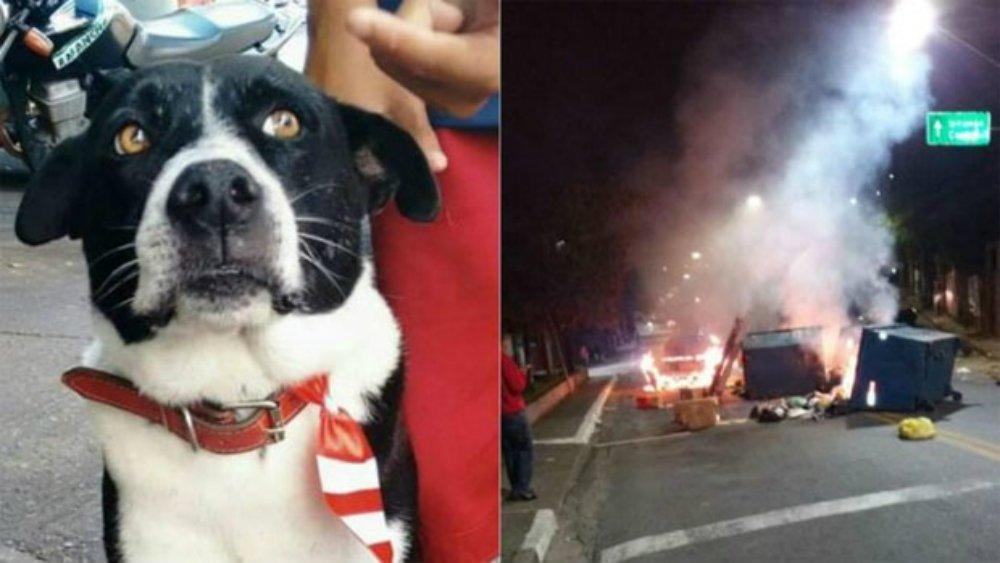 Cão que foi morto com um  tiro por latir para PM tem  manifestações em sua memória