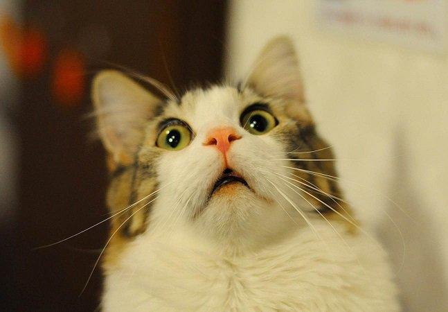 Monitoramento via GPS  mostra que gatos dão 'voltinhas'  imensas na madrugada