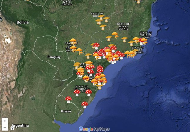 Mapa colaborativo mapeia a incidência  de cogumelos mágicos no Brasil