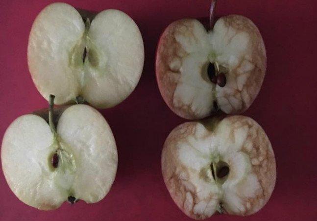 Professora usa maçãs para mostrar aos alunos o que acontece quando alguém sofre bullying