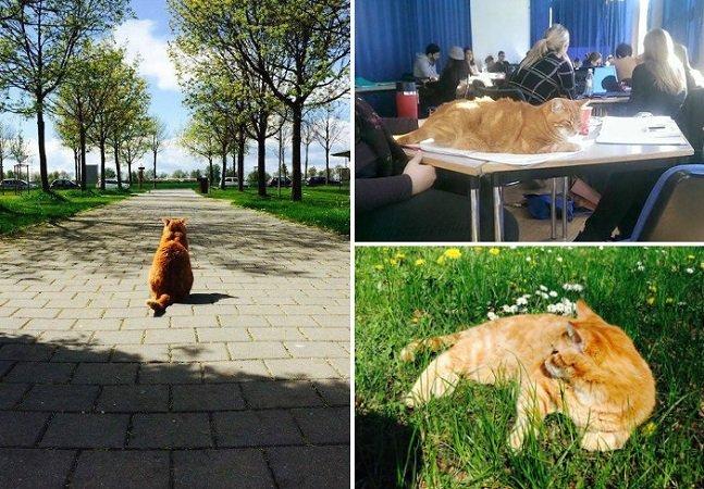 Esta gata vai todos os dias à universidade para aliviar o stress dos estudantes