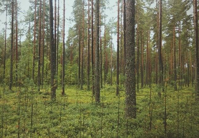 Noruega proíbe corte  de árvores em todo o país
