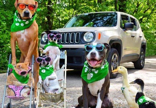 Família de 2 pitbulls, 2 terriers, um gato e uma dupla de patos, todos adotados, faz sucesso no Instagram