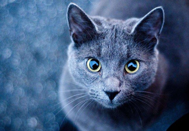 Cientistas encontram possível  ligação entre pessoas que  possuem gatos e a esquizofrenia