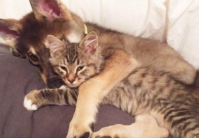 Casal deixa seu cachorro escolher um gatinho no abrigo e eles viram melhores amigos