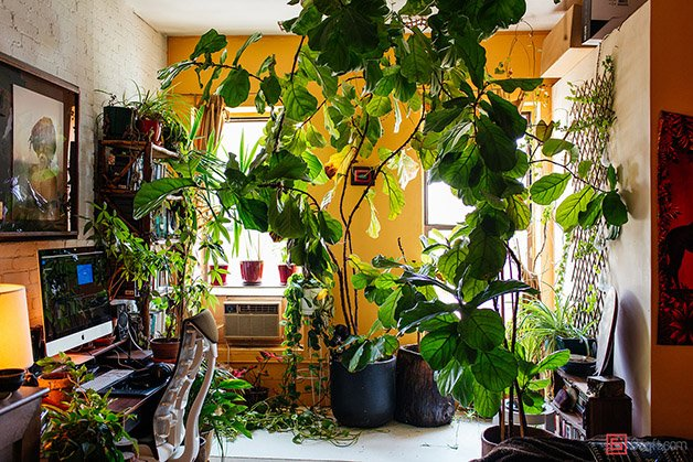 Summer-Rayne-Oakes-Plant-Filled-Apartment-in-Williamsburg-Brooklyn-bedroom-office-3