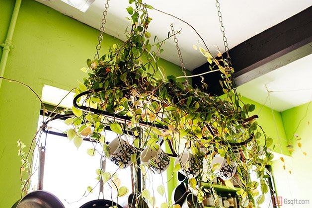 Summer-Rayne-Oakes-Plant-Filled-Apartment-in-Williamsburg-Brooklyn-hanging-sled-planter-2