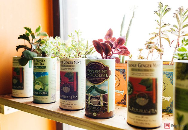 Summer-Rayne-Oakes-Plant-Filled-Apartment-in-Williamsburg-Brooklyn-tea-container-succulents