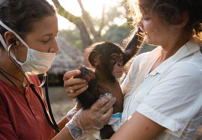 Este abrigo dedicado a cuidar de chimpanzés órfãos vai conquistar seu coração