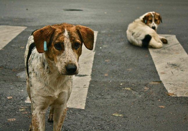 Projeto de Lei prevê multa para quem alimentar animais abandonados em Petrolina