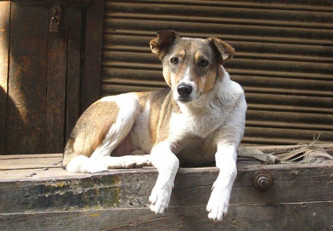 Holanda se torna o primeiro país sem cães abandonados – e não precisou sacrificar nenhum