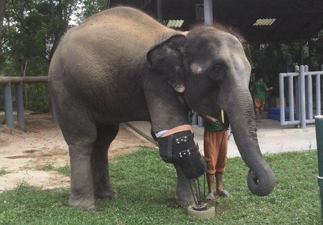 Apaixonado por animais cria prótese gigante pra elefante que perdeu uma perna ao pisar uma mina