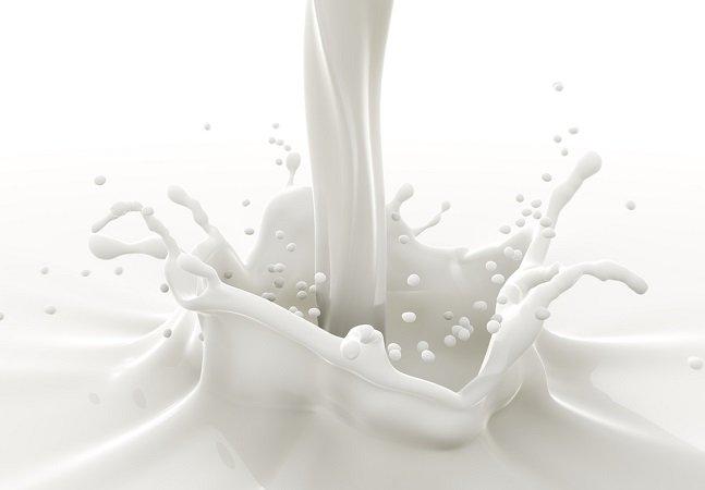 Cientistas explicam por que o leite de barata pode ser o alimento do futuro