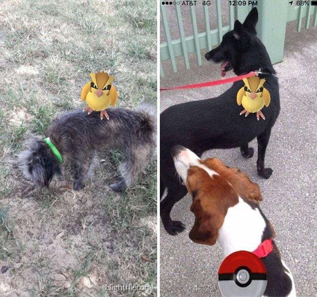 pokemon-go-dog-walking-animal-shelter-muncie-11