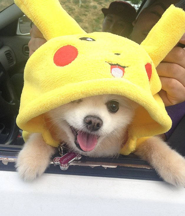 pokemon-go-dog-walking-animal-shelter-muncie-19