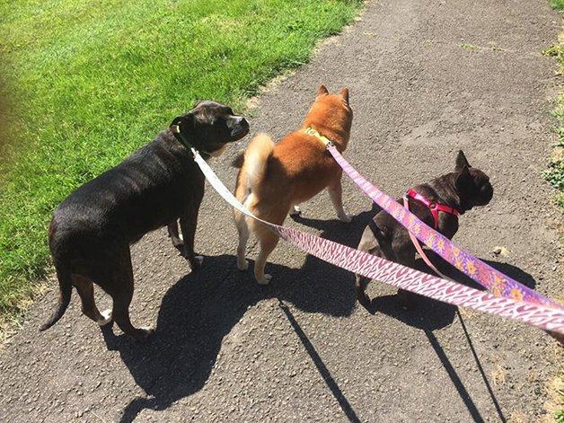 pokemon-go-dog-walking-animal-shelter-muncie-2