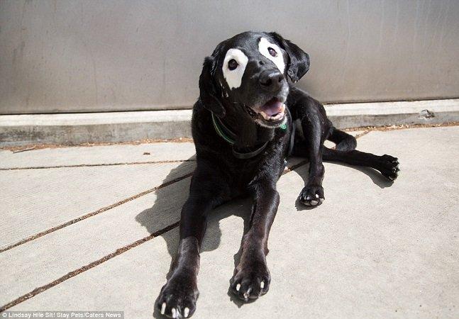 Cachorro com vitiligo faz sucesso na web graças a suas manchinhas ao redor dos olhos