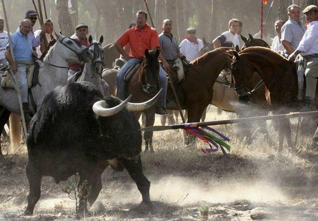 Massacre público de touros é finalmente proibido em evento  na Espanha