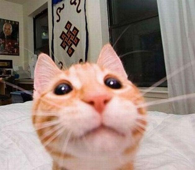 CatSnaps1