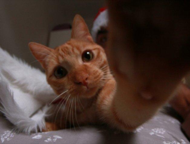 CatSnaps2
