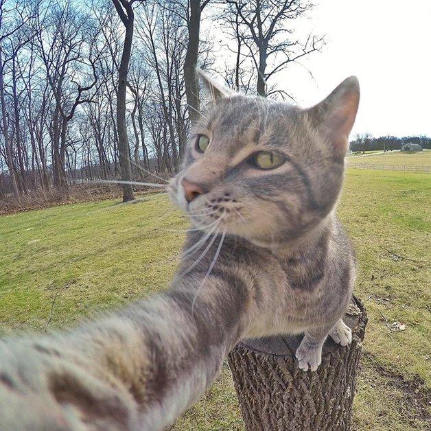 CatSnaps3