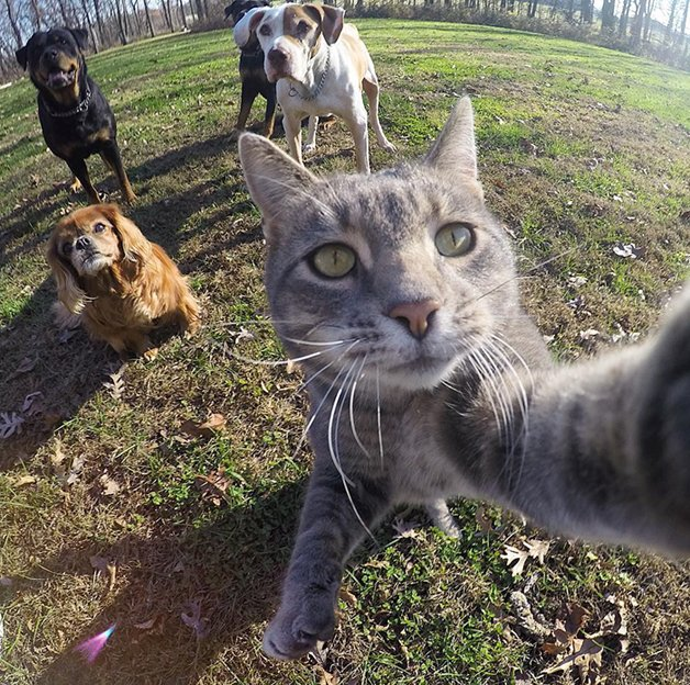 CatSnaps4