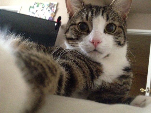 CatSnaps5
