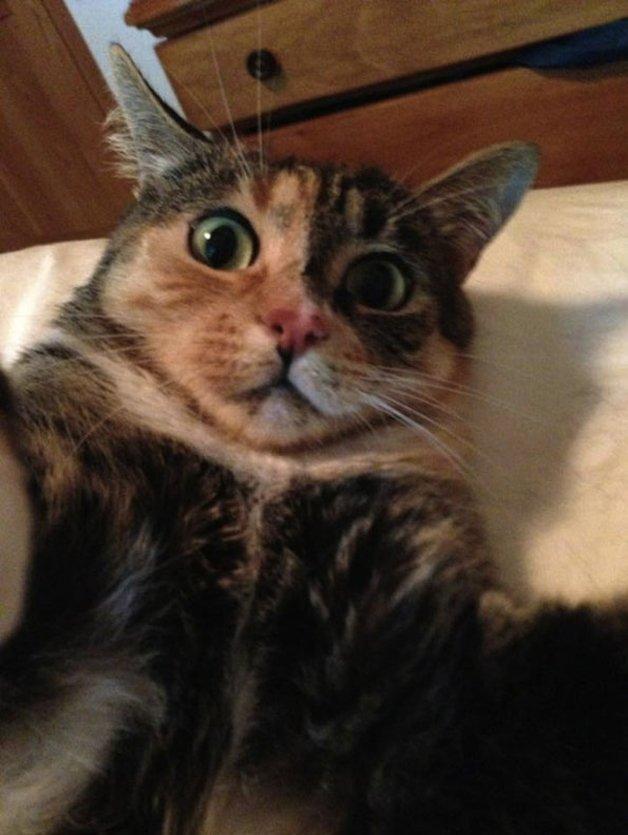 CatSnaps9