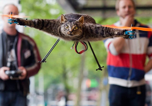 Ele gostava tanto de seu gato que depois  de sua morte resolveu transformá-lo  num gato empalhado voador