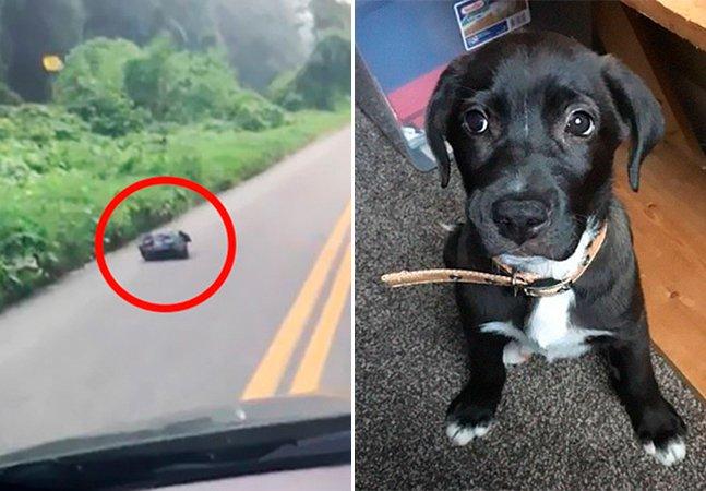 Mulher se surpreende ao ver saco de lixo se movendo, corre para salvá-lo e vira heroína