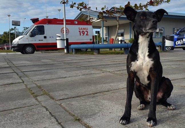 'Negão', o fiel cachorro que permanece na porta de hospital em SC 8 meses depois da morte de seu dono