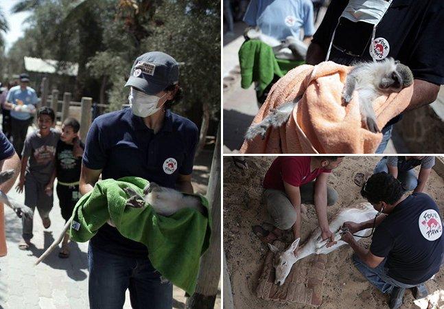 """FINALMENTE: voluntários se juntam e salvam os 15 animais que ainda viviam no """"pior zoológico do mundo"""""""