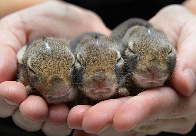 Fotógrafo visita abrigos pra retratar animais recém-nascidos e as imagens são de derreter qualquer coração