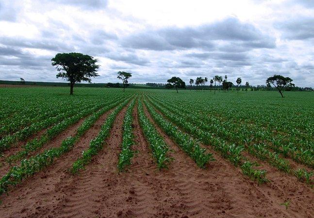 'Epidemia de câncer' entre agricultores do Rio Grande do Sul coloca agrotóxicos em xeque