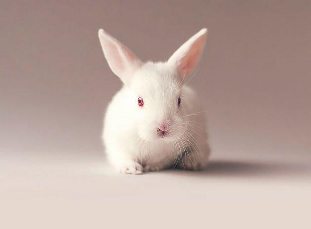 bunny5-57a2764021ee3__880