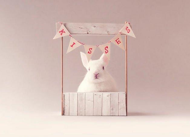 bunny7-57a27654538f4__880