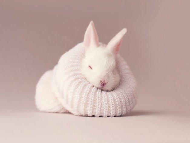bunny8-57a2765cf139e__880