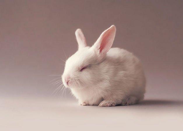 bunny9-57a276662137c__880