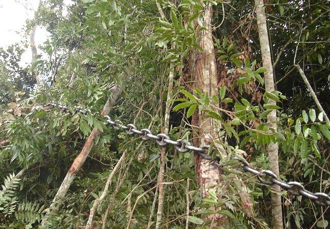 Uso de correntão é liberado para abertura de áreas florestais no Mato Grosso